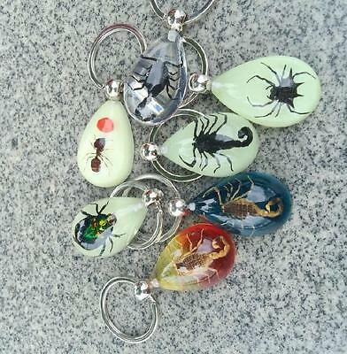 12 Pcs Scorpion Spider Taxidermy Insect Bug Natural Key Chain Key Ring