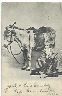 Musical Boy With His Violin - Sitting With A Donkey 1903 Postcard