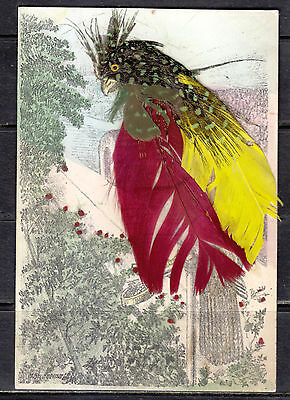 Birds, Real Feathers, 3 Cards,