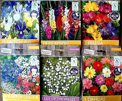 Asstd Beautiful Garden Flowers Bulbs Spring Summer Perennial Plant Quality Pack