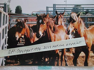 Mustang Horse Photo - Western Decor - Country - Pictures - Offer
