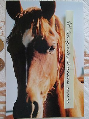 Mustang Horse Photo - Western Decor - Country - Photography - Best Offer