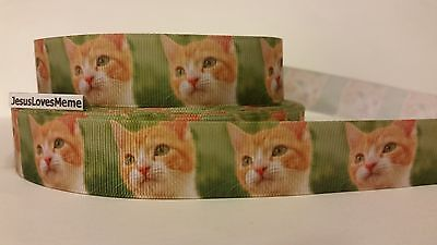 "7//8/"" Grosgrain Ribbon Cats Kittens Siamese Tabby Calico Meow Kitty Fish Bones"