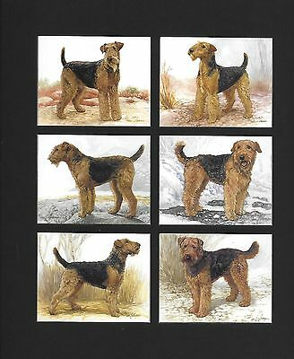"""AIREDALE TERRIERS Collector Cards New  Mounted Black Ready for Framing 10 ½ x 9"""""""