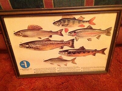 """Vintage Fishing Lures Pictures extremely rare set of 4 framed 21""""x15"""""""