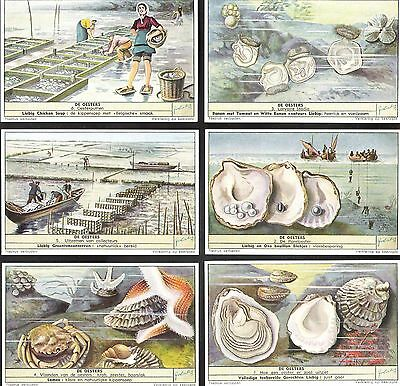 1954,liebig Cards,*oysters*,s1596