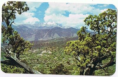 Pikes Peak Framed By Ancient Junipers - Colorado - Postcard  # 3527