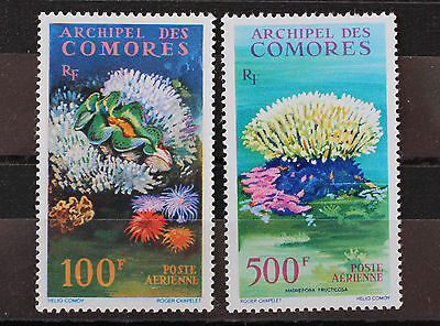 Comoro Islands 1962  Air Stamps Coral and Clam MNH SG29-30