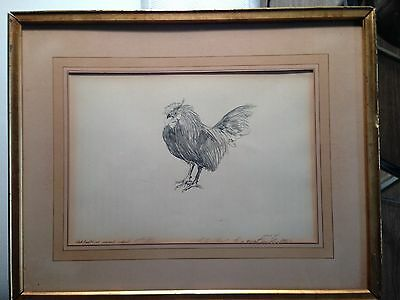 "drawing pencil original "" black breasted cockerel "" signed by shelly fink"