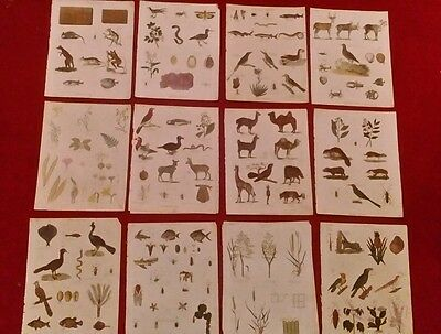 12 Antique Natural History Prints. Original Hand Colouring. 1780