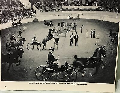 Vintage Print Harness Horses Show Madison Square Garden George Ford Morris 1952