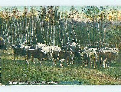 Divided-Back COWS ON DAIRY FARM Brockton Massachusetts MA HM6909