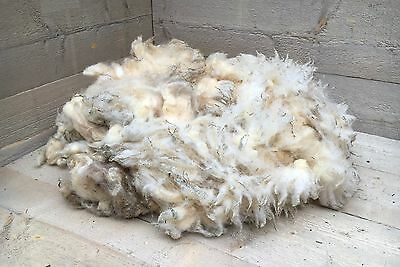 Beautiful white Texel sheep wool for sale, suitable for spinning.