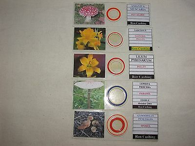 Collection of 5 Botanical Microscope Slides