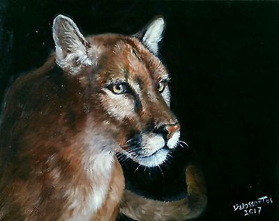 """PUMA'S  GAZE  oil on canvas 16x20""""  very detailed work on the fur  AWESOME!"""