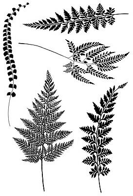 Woodware Clear Singles Rubber Stamp - Ferns  JGS484