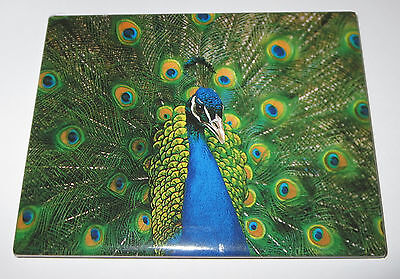 PEACOCK Magnet Fridge Realistic Animals Bird Feathers Exotic New