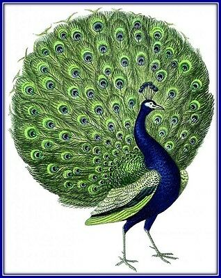 30 Custom Blue Peacock Art Personalized Address Labels