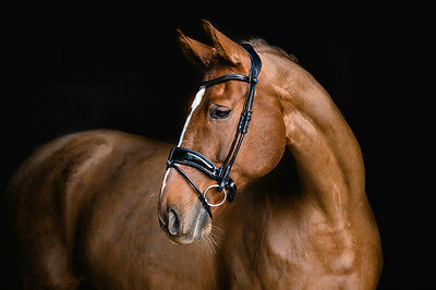PS of Sweden Flying Deluxe Change Revolution Snaffle Bridle