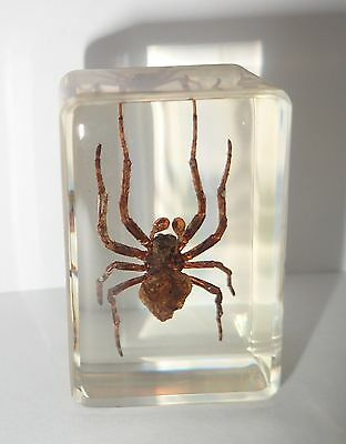 Ghost Spider in Small Amber Clear Paperweight Education Insect Specimen
