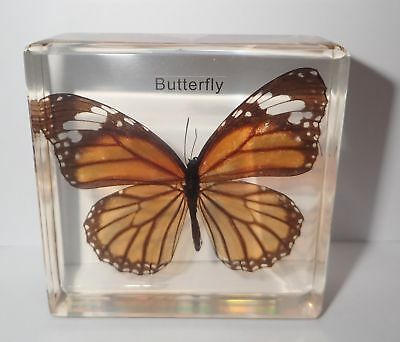 The Common Tiger Butterfly in Amber Clear Paperweight Education Insect Specimen