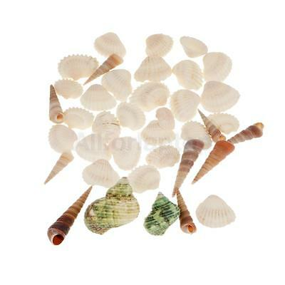 muscheln sea shells mix mit schnecken deko maritim see meer meerdekoration k39 eur 2 49. Black Bedroom Furniture Sets. Home Design Ideas