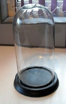 ANTIQUE EDWARDIAN c1900 LARGE HAND BLOWN DISPLAY GLASS DOME ON WOOD PLINTH