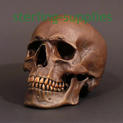 Life Size Human Skull Solid Bronze Hand Made English Armoury  Skeleton Sculpture