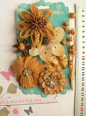 WILD WOOD HAZEL Collection - 7 Assorted Flower Pack Approx 8-80mm Across - PRIMA