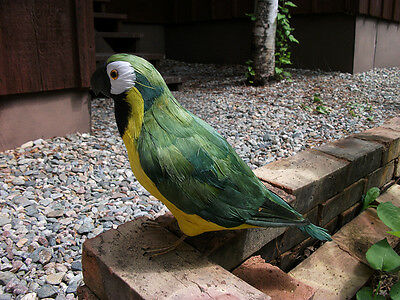 REALISTIC GREEN PARROT REPLICA BIRD PROP Animal Figurine 147d FREE SHIPPING USA