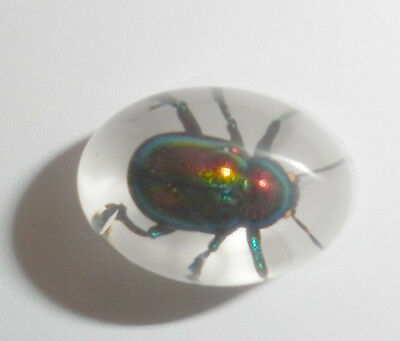 Insect Cabochon Shining Leaf Beetle Oval 12x18 mm white bottom 1 piece
