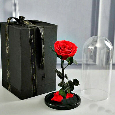 Preserved Red Rose in Glass Belle Beauty and the Beast Natural Disney Rose 30cm
