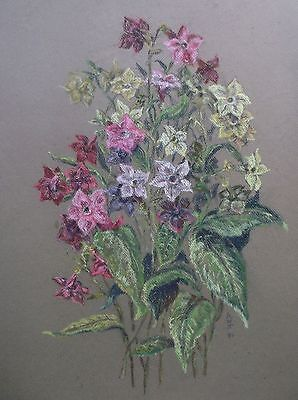 COLOURED PASTEL DRAWING signed/dated A STUDY OF SUMMER FLOWERS