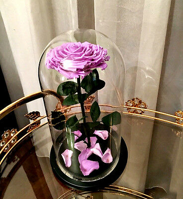 "Beauty & The Beast Eternal Enchanted Rose in Glass 11,8"" Real Preserved Purple"