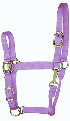 Hamilton 1QAS LGLV 11-16 1-Inch Adjustable Quality Horse Halter with Larg... New