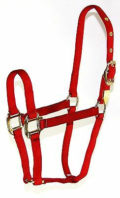 Hamilton 8D SMRD 3/4-Inch Nylon Arabian Horse Halter for 500 to 800-Pound... New