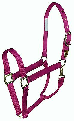Hamilton 1DS SMWN Deluxe 1-Inch Nylon Horse Halter with Snap Wine Small New