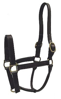 Hamilton 1-Inch Leather Deluxe Halter Yearling Size Fits 300 to 500-Pound... New