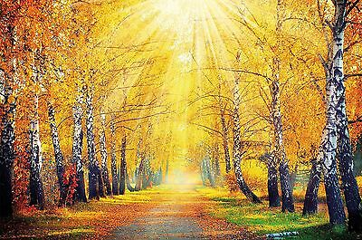 Autumn photo wall paper autumnal forest wall decoration for living room G... New