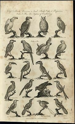 Vulture Falcons Owl Parrot Wattle Roller Oriole 1789 antique engraved print
