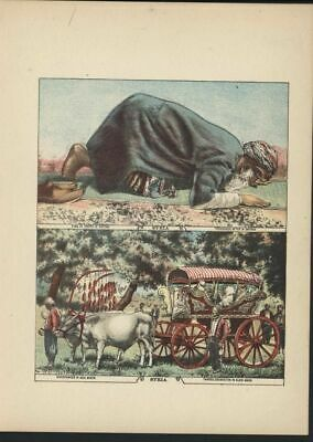 Syria Muslim Praying Oxen cart Smyrna 1880's lovely color print World culture