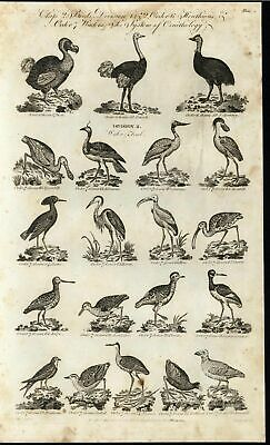 Ibis Snipe Spoonbill Heron Sheathbill Oyster Catcher 1794 antique engraved print