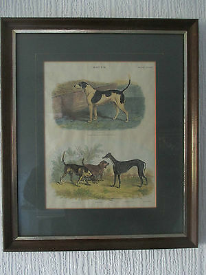 FRAMED PRINT BY G. AIKMAN (1830-1905) DEPICTING A VARIETY OF 19th CENTURY DOGS**