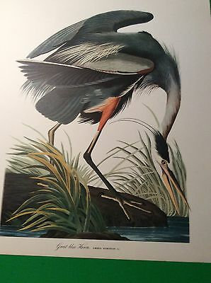 BIRDS ORNITHOLOGY PAINTING OF GREAT BLUE HERON from THE AUDUBON FOLIO 1964