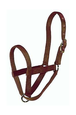 Hamilton 30DCF BR 1-Inch Calf Turn out Halter Brown New