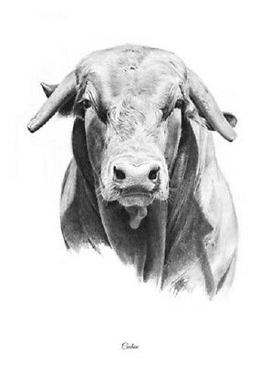"""Cochise"" (Head Study) 5X7 Mini Print by ROBYN COOK PENCIL ART~PBR Bull Series~"