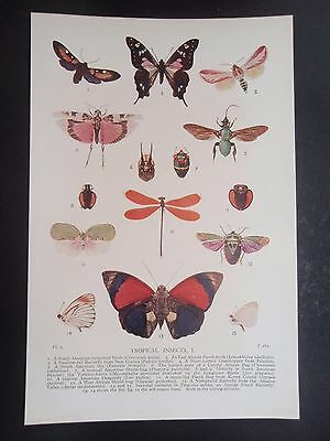 TYPES OF INSECT old vintage retro print BUG BUTTERFLY MOTH etc 1931