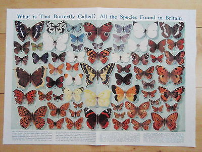 Types of BRITISH BUTTERFLY old vintage retro print BUTTERFLIES inc  SWALLOWTAIL