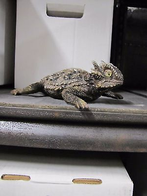 Texas Horned Toad ( Lizard ) Resin statue