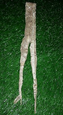 AWESOME & RARE Copperhead Skin Shed with Head! For Craft or Educational